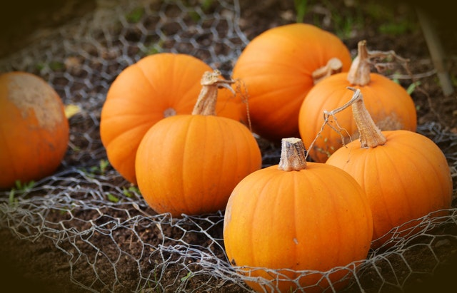 Pumpkins are for more than just Halloween